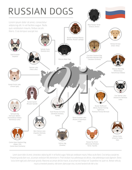 Dogs by country of origin. Russian dog breeds. Infographic template. Vector illustration
