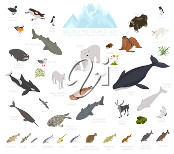 Ice sheet and polar desert biome. Isometric 3d style. Terrestrial ecosystem world map. Arctic animals, birds, fish and plants infographic design. Vector illustration