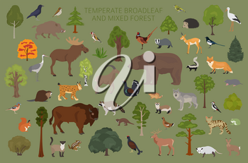 Temperate broadleaf forest and mixed forest biome. Terrestrial ecosystem world map. Animals, birds and plants graphic design. Vector illustration