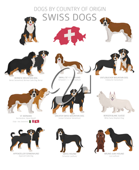 Dogs by country of origin. Swiss dog breeds. Shepherds, hunting, herding, toy, working and service dogs  set.  Vector illustration