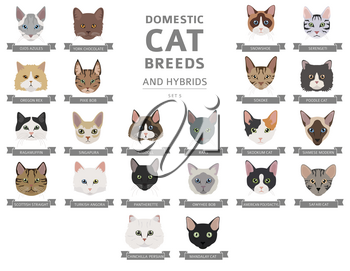 Domestic cat breeds and hybrids portraits collection isolated on white. Flat color cat`s head style set. Vector illustration