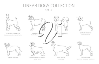Simple line dogs collection isolated on white. Dog breeds. Flat style clipart set. Vector illustration