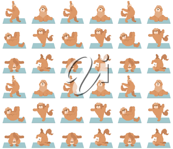 Yoga dogs poses and exercises seamless pattern design. Cockapoo clipart. Vector illustration