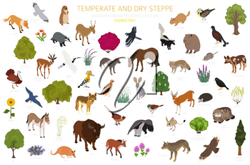 Temperate and dry steppe biome, natural region isometric infographic. Prarie, steppe, grassland, pampas. Terrestrial ecosystem world map. Animals, birds and vegetations ecosystem design set. Vector illustration