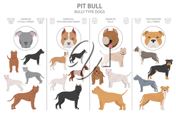 Pit bull type dogs. Different variaties of coat color bully dogs set.  Vector illustration