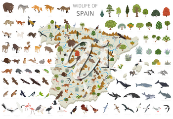 Isometric 3d design of Spain wildlife. Animals, birds and plants constructor elements isolated on white set. Build your own geography infographics collection. Vector illustration