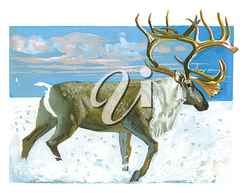 Royalty Free Clipart Image of an elk