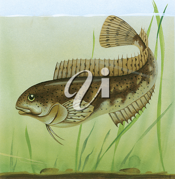 Royalty Free Clipart Image of a Pond Fish