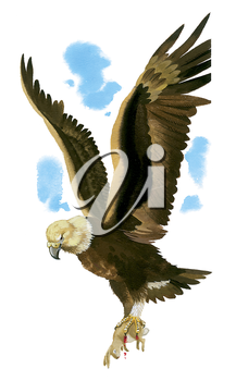 Royalty Free Clipart Image of an Eagle with his Rabbit Dinner
