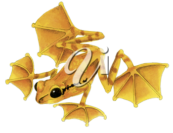 Royalty Free Clipart Image of a Yellow Flying Frog