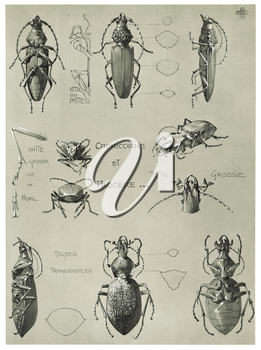Royalty Free Clipart Image of a Capricorn Beetle