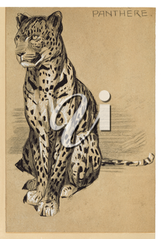 Royalty Free Clipart Image of a Leopard