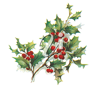 Royalty Free Clipart Image of Holly and Ivy