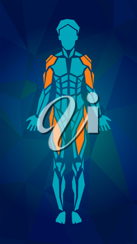 Polygonal anatomy of female muscular system, exercise and muscle guide. Women muscle vector art, front view. Vector illustration