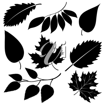Black leaves silhouettes isolated on white. Vector illustration