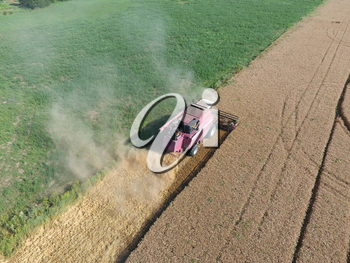 Cleaning wheat harvester. Ripe wheat harvester mowed and straw easily sprayed behind him. Top view.