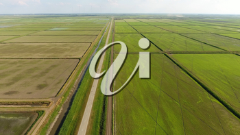 Growing rice on flooded fields. Ripe rice in the field, the beginning of harvesting. A birds-eye view. Flooded rice paddies. Agronomic methods of growing rice in the fields. Flooding the fields with water in which rice sown.