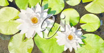 Water lilys on the lake. 3D rendering
