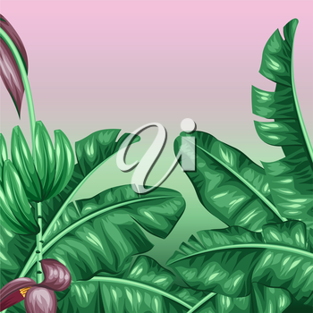 Background with banana leaves. Decorative image of tropical foliage, flowers and fruits. Design for advertising booklets, banners, flayers, cards.