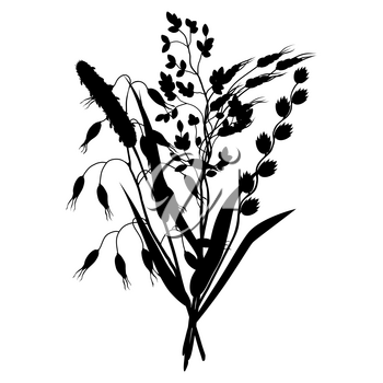 Bouquet with herbs and cereal grass silhouettes. Floral design of meadow plants.