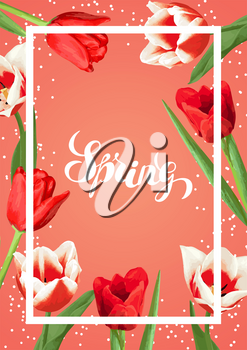 Spring background with red and white tulips. Beautiful realistic flowers, buds and leaves.