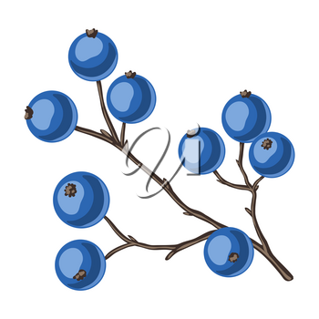Illustration of branch with berries. Stylized hand drawn image in retro style.