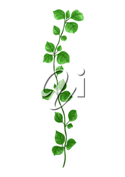 Illustration of sprig with green leaves. Decorative natural plant.