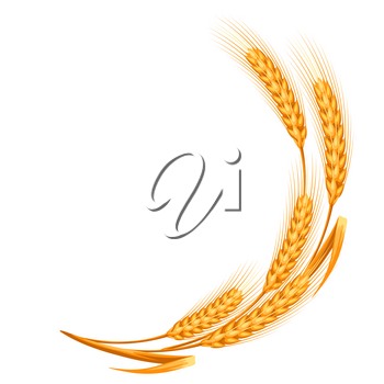 Illustration of ripe wheat ears. Agricultural natural emblem.