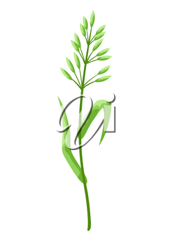 Illustration of stylized cereal grass. Decorative meadow plant.