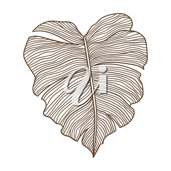 Illustration of stylized palm leaf. Decorative image of tropical foliage and plant. Linear texture.
