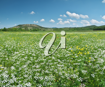 Spring flowers panorama in meadow. Beautiful landscapes.