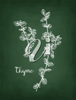Chalk sketch of thyme on blackboard background. Hand drawn vector illustration. Retro style.