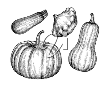 Squash set isolated on white background. Ink sketch collection. Hand drawn vector illustration. Retro style