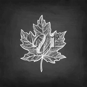 Maple leaf. Chalk sketch on blackboard background. Hand drawn vector illustration. Retro style.