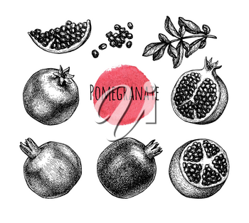Pomegranate set. Fruits, seeds and branch. Ink sketch isolated on white background. Hand drawn vector illustration. Retro style.