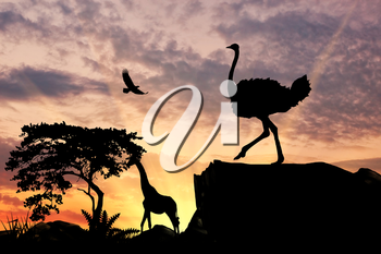 Silhouette of an ostrich on a hill at sunset savanna and animals