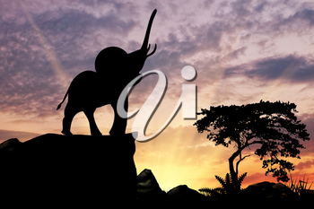 Silhouette of an elephant on the hill at sunset savanna