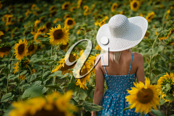 beautiful sweet sexy girl in a blue dress walking on a field of sunflowers , smiling a beautiful smile,cheerful girl,style, lifestyle , ideal for advertising and photo sun shines bright and juicy
