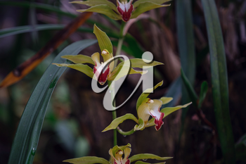 Beautiful exotic flower orchid in a greenhouse in Thailand. place Inthanon Lady's Slipper Orchid Under Initiative Conservation Project
