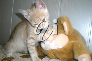 Cute cats, furry pets and friends. Domestic cat