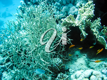 Life on a coral reef. Animal world underwater on a reef.
