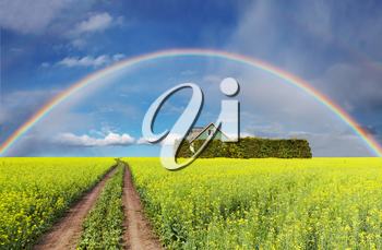 Rural landscape with rainbow over blooming field and house