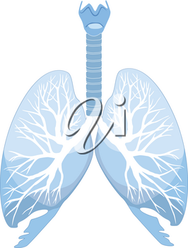 Human lungs and bronchi. Human organ structure. Medical sign