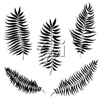 Leaves set. Palm leaf silhouette. Nature decor collection