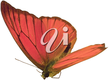 Royalty Free Photo of a Red Butterfly