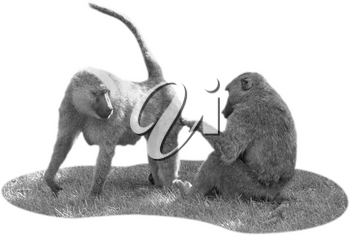 Royalty Free Black and White Photo of a Pair of Baboons