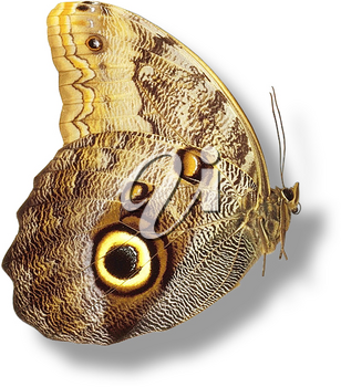 Royalty Free Photo of a Side View of a Butterfly