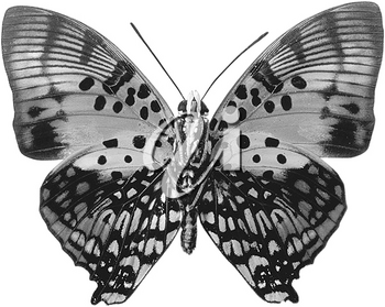 Royalty Free Photo of a Moth in Black and White