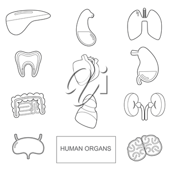 Human organs in outline style. Vector icons set isolate on white background. Human anatomy organ, vector illustration