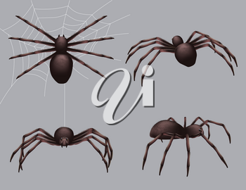Spider realistic. Nature insects crawl venom black fear spider vector danger collection. Danger insect poisonous, spider crawl illustration